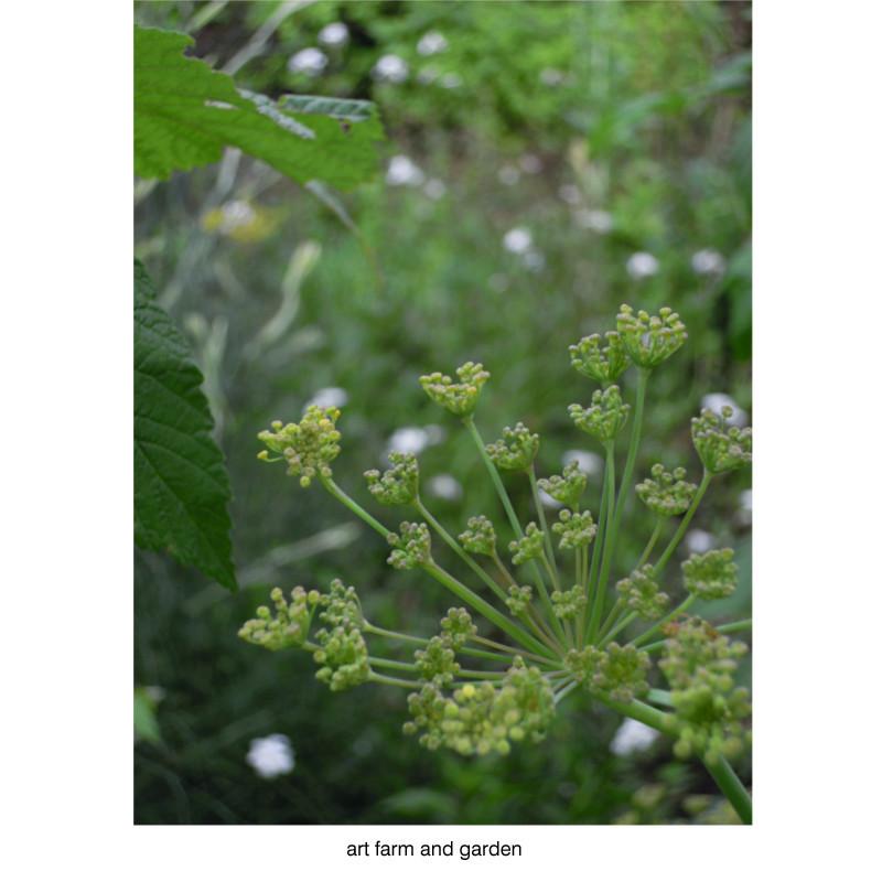 7月の庭/art farm & garden_b0290469_21322993.jpg