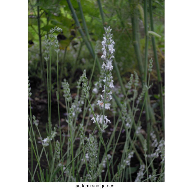 7月の庭/art farm & garden_b0290469_21345749.jpg