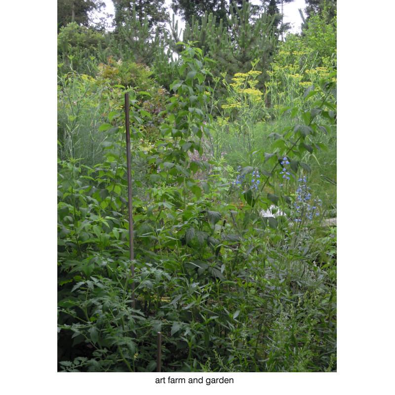 7月の庭/art farm & garden_b0290469_21353873.jpg
