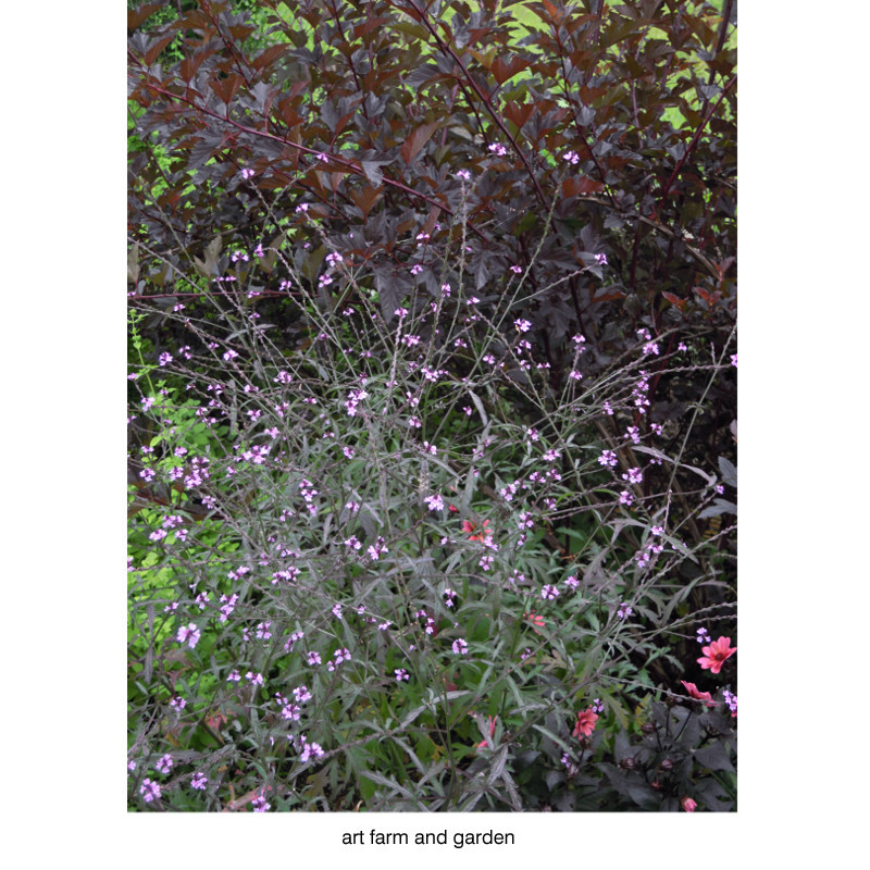 7月の庭/art farm & garden_b0290469_21354928.jpg