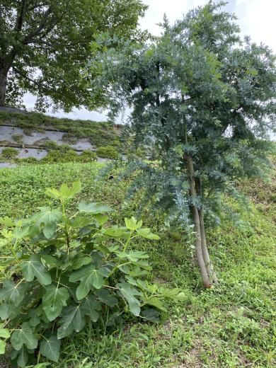 ブルーベリー初収穫&辺りの風景_c0334574_19110093.jpeg
