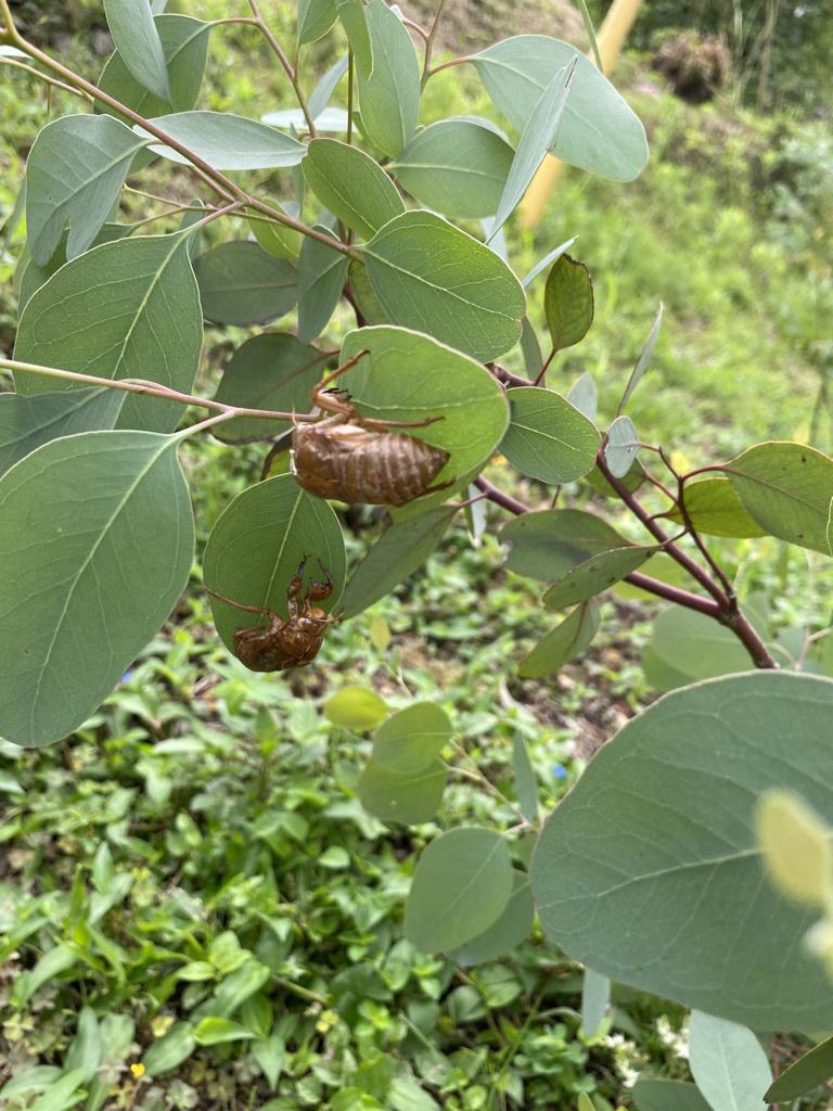 ブルーベリー初収穫&辺りの風景_c0334574_19114424.jpeg