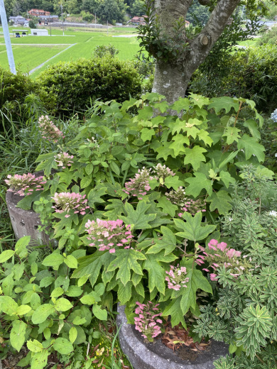 ブルーベリー初収穫&辺りの風景_c0334574_19120362.jpeg