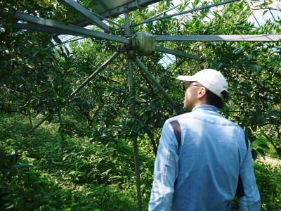 究極の柑橘『せとか』 令和3年度の収穫に向け、着果後の成長の様子を現地取材 してきました!_a0254656_19355373.jpg