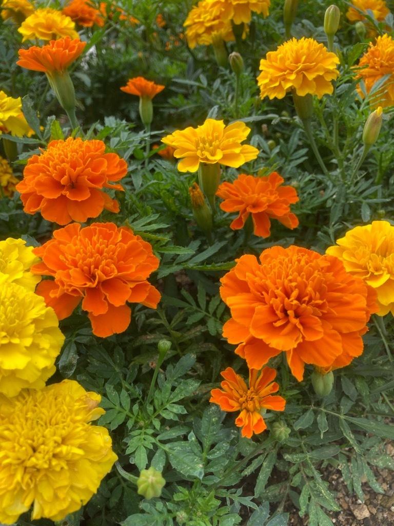 夏の花_f0204295_15594431.jpg