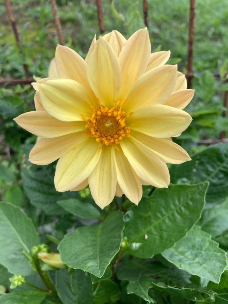 夏の花_f0204295_16081258.jpg