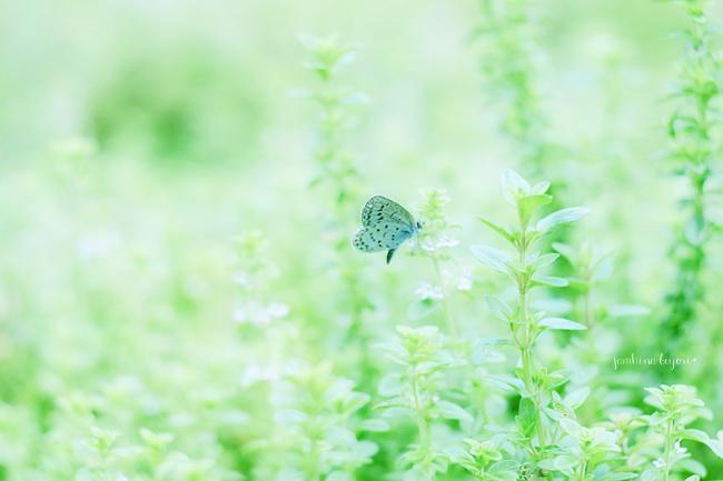 緑のなかで_e0268051_15193453.jpg