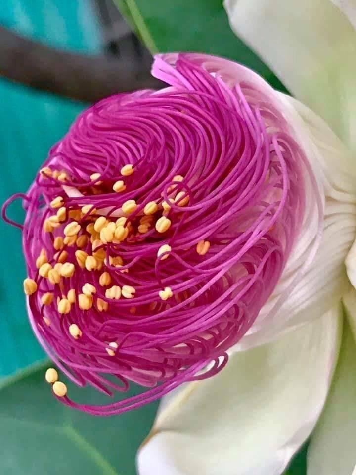 美しい花~2021年七夕~_d0085018_16280789.jpeg