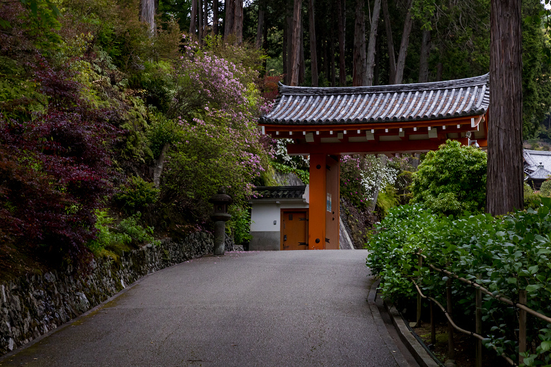 三室戸寺のツツジ_f0155048_22362541.jpg
