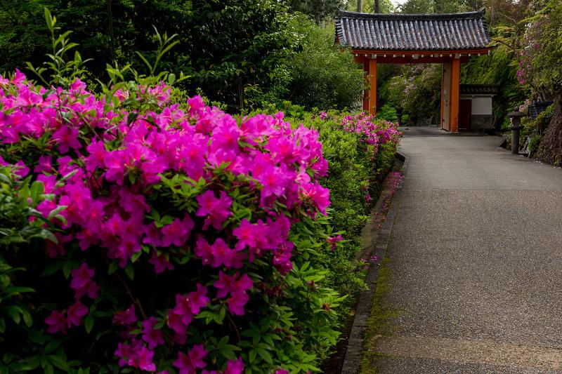 三室戸寺のツツジ_f0155048_22455202.jpg