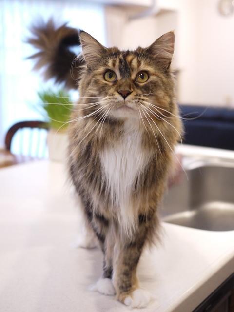 猫のお留守番 天ちゃん麦くん茶くん〇くんAoiちゃん編。_a0143140_21153257.jpg