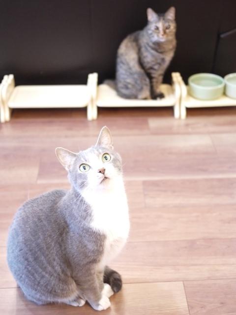 猫のお留守番 天ちゃん麦くん茶くん〇くんAoiちゃん編。_a0143140_21160366.jpg