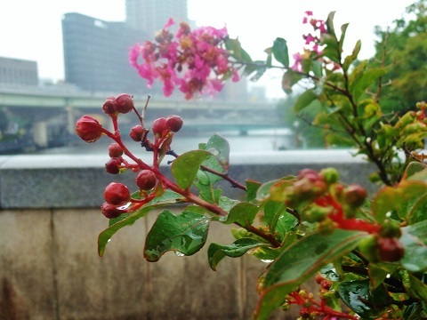 Rainy Day Woman_e0390949_10112683.jpg