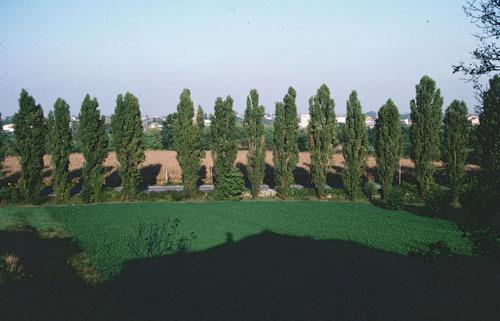 ヴィチェンツァのパラディオ建築_a0166284_12163547.jpg