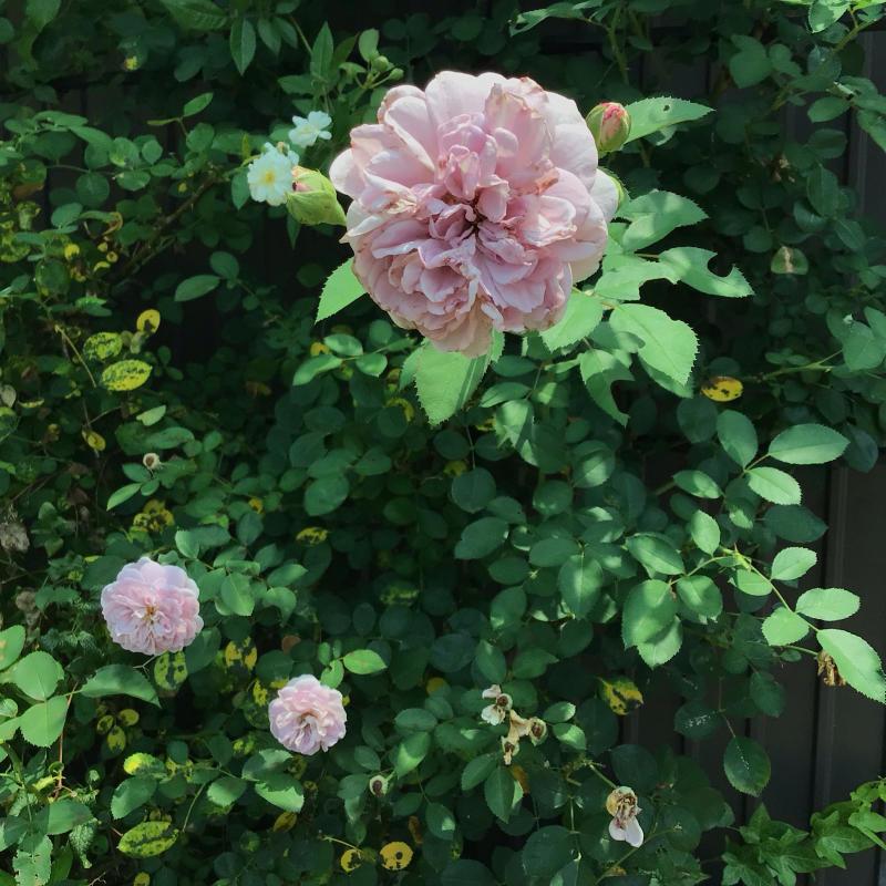 挿し木用に紫陽花を切った事と今日の音_c0404712_23460378.jpg