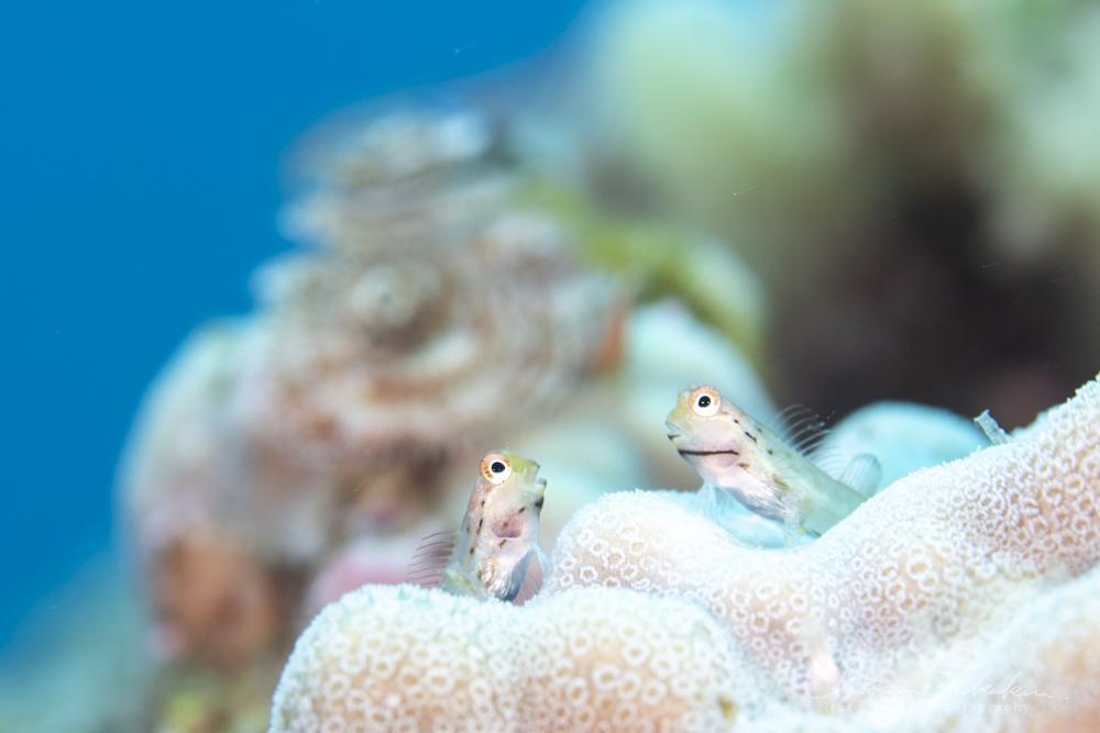 ギンポと稚魚の楽園!_b0186442_09351082.jpg