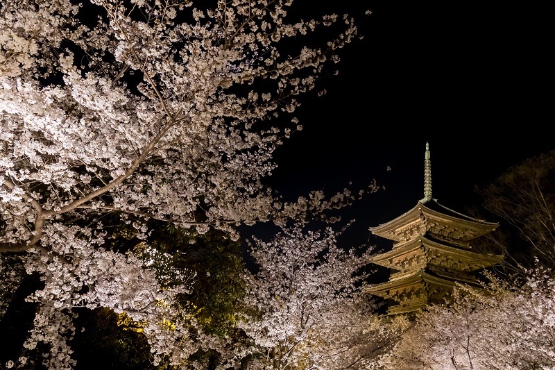 2021桜咲く京都 教王護国寺ライトアップ(東寺)_f0155048_20360018.jpg