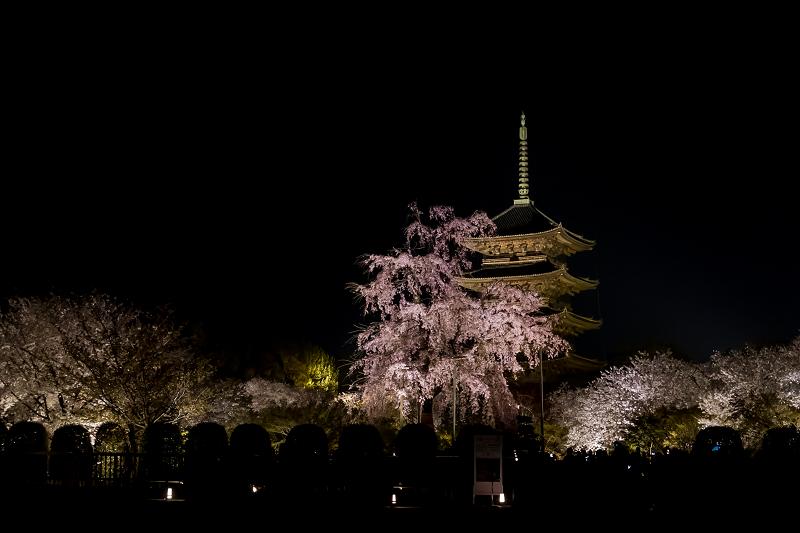 2021桜咲く京都 教王護国寺ライトアップ(東寺)_f0155048_20361063.jpg