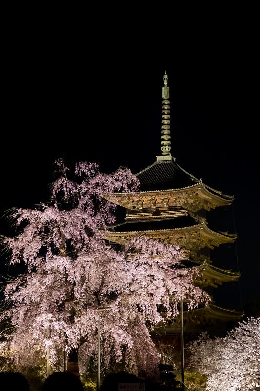 2021桜咲く京都 教王護国寺ライトアップ(東寺)_f0155048_20362393.jpg