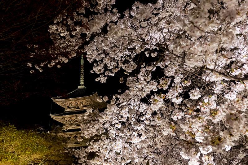 2021桜咲く京都 教王護国寺ライトアップ(東寺)_f0155048_20385227.jpg