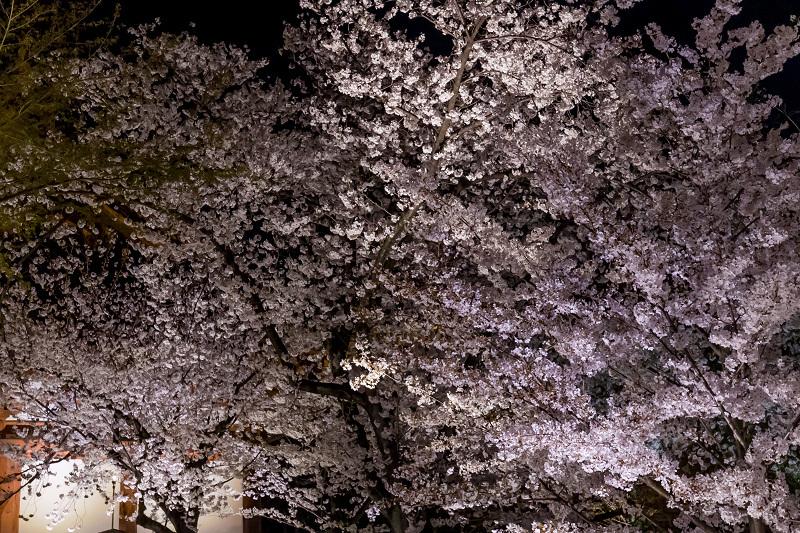 2021桜咲く京都 教王護国寺ライトアップ(東寺)_f0155048_20385851.jpg