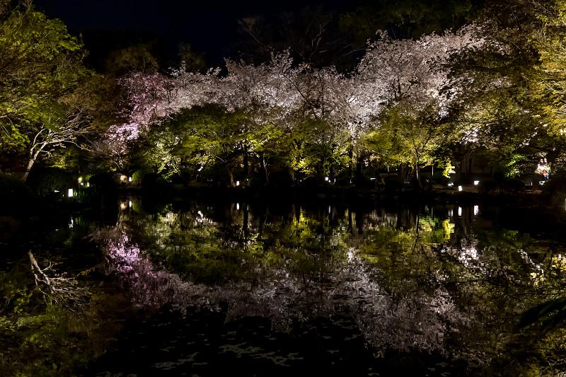 2021桜咲く京都 教王護国寺ライトアップ(東寺)_f0155048_20390535.jpg