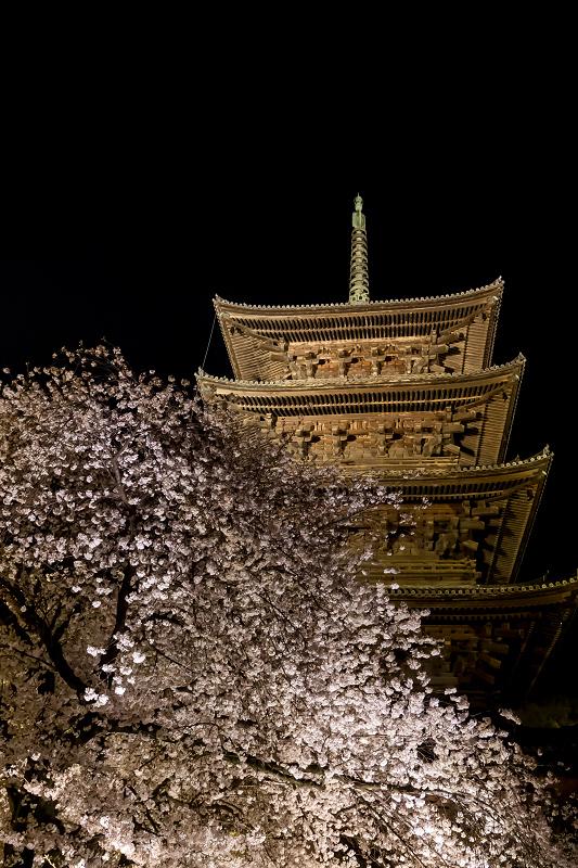 2021桜咲く京都 教王護国寺ライトアップ(東寺)_f0155048_20393231.jpg