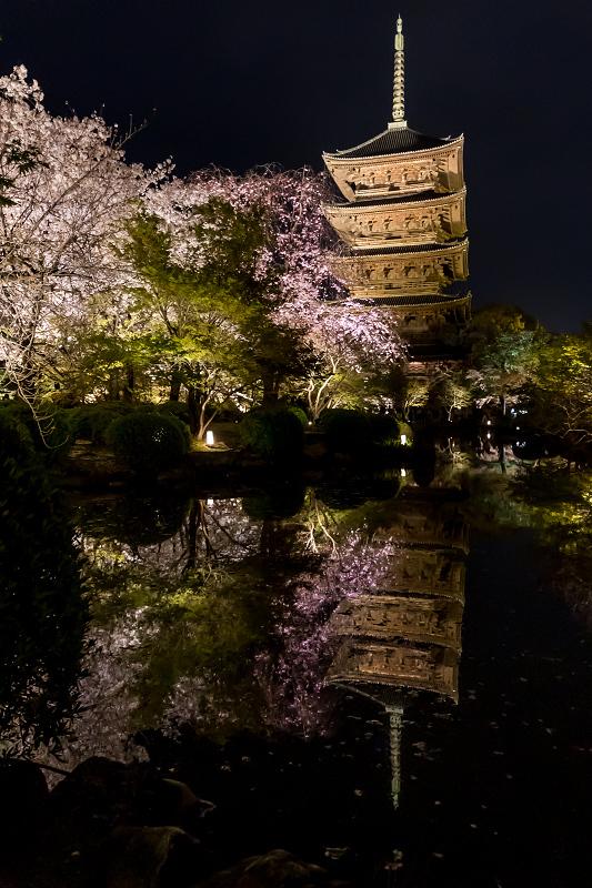 2021桜咲く京都 教王護国寺ライトアップ(東寺)_f0155048_20395317.jpg