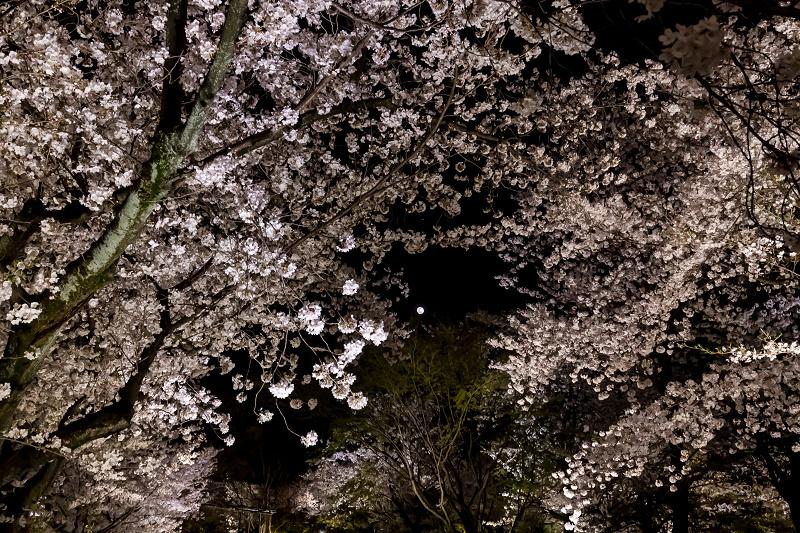 2021桜咲く京都 教王護国寺ライトアップ(東寺)_f0155048_20404700.jpg