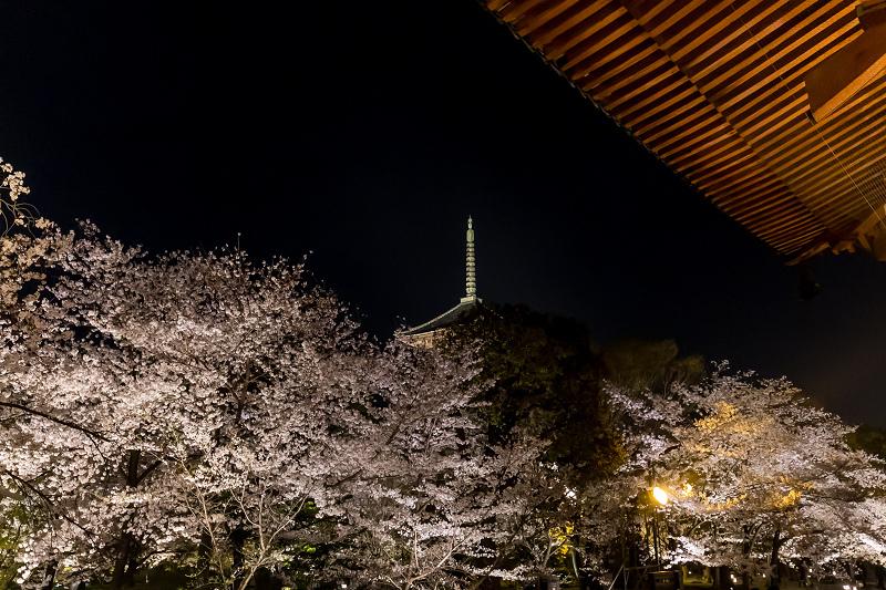 2021桜咲く京都 教王護国寺ライトアップ(東寺)_f0155048_20435952.jpg