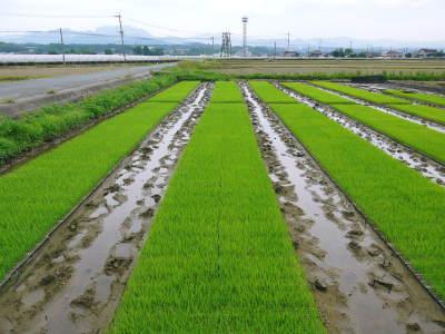 無農薬栽培の『米粉』『雑穀米』『発芽玄米』大好評販売中!令和3年度の田植えの様子を現地取材!(前編)_a0254656_16494068.jpg