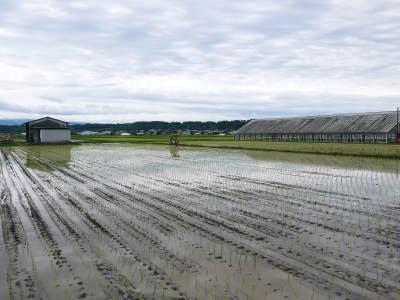 無農薬栽培の『米粉』『雑穀米』『発芽玄米』大好評販売中!令和3年度の田植えの様子を現地取材!(前編)_a0254656_17513912.jpg
