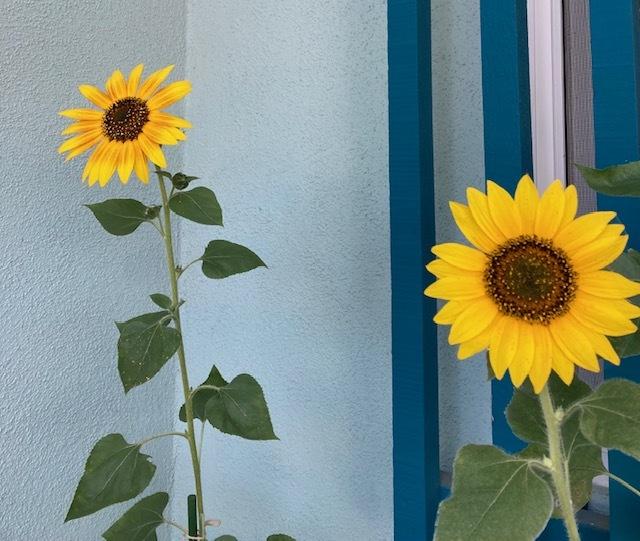 7月の庭_e0350971_14015103.jpg
