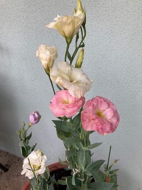 7月の庭_e0350971_14021285.jpg