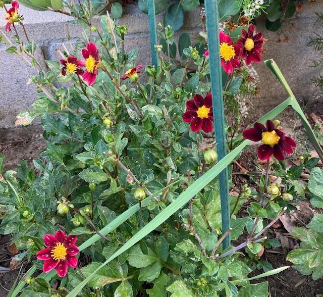 7月の庭_e0350971_14222114.jpg