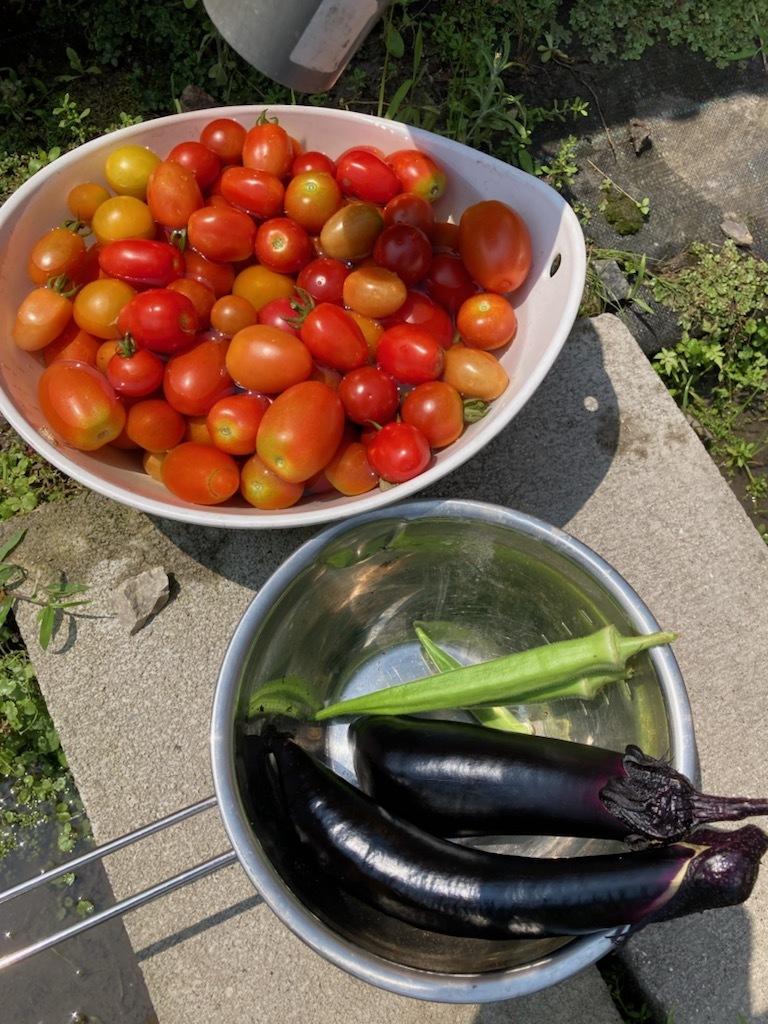 トウモロコシちょっと収穫_f0204295_14050711.jpg