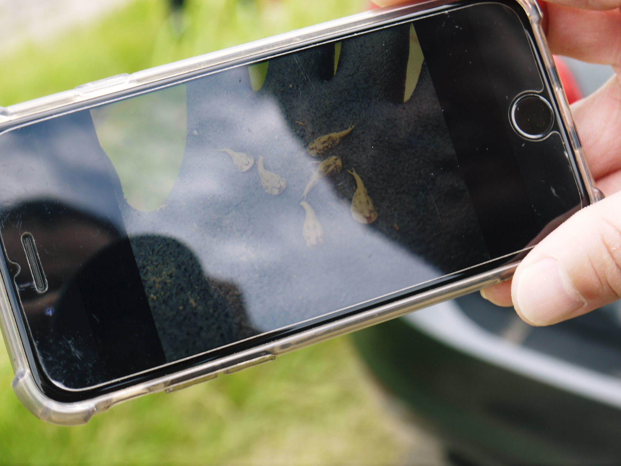 無農薬栽培の『米粉』『雑穀米』『発芽玄米』大好評販売中!令和3年度の田植えの様子を現地取材!(後編)_a0254656_19444347.jpg