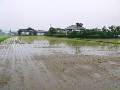 無農薬栽培の『米粉』『雑穀米』『発芽玄米』大好評販売中!令和3年度の田植えの様子を現地取材!(後編)_a0254656_19545490.jpg