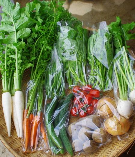 今週の野菜セット(7/13~7/17着)_c0110869_16490602.jpg