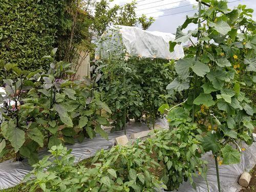 弟の家庭菜園_c0056473_16153165.jpg