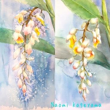 月桃、咲いています_b0011075_12360955.jpg