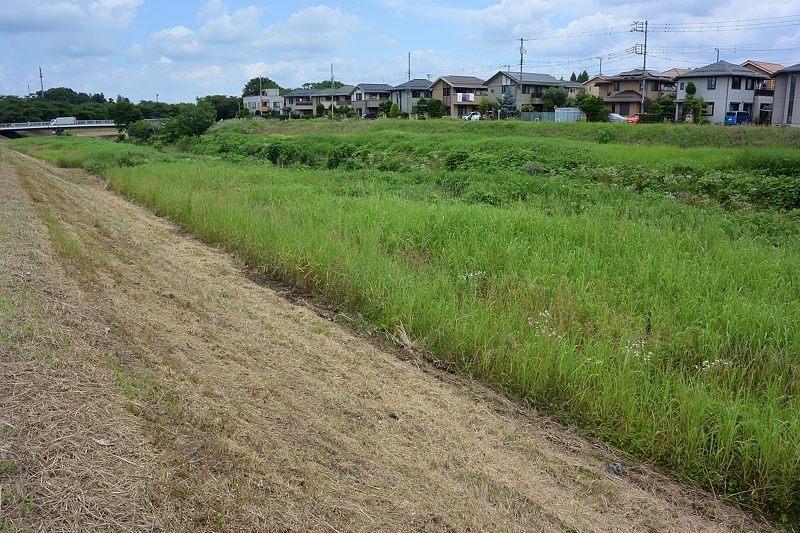 小畔川便り(草刈りの後で-4:周辺の様子:2021/6/28.30)_f0031682_16310530.jpg