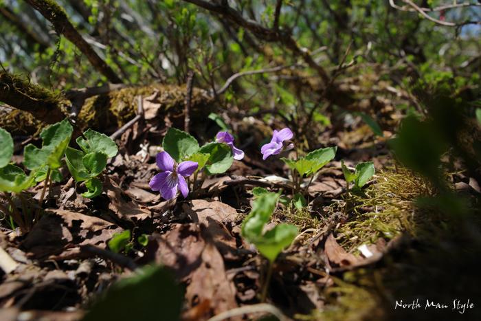 春のオロフレ山_a0114060_13363150.jpg