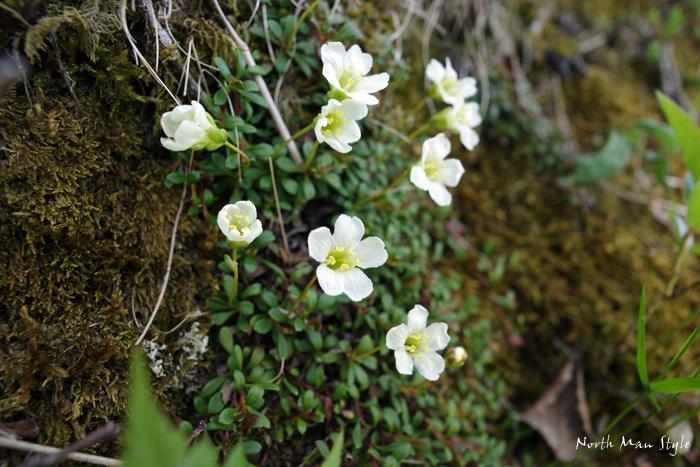 春のオロフレ山_a0114060_13364319.jpg