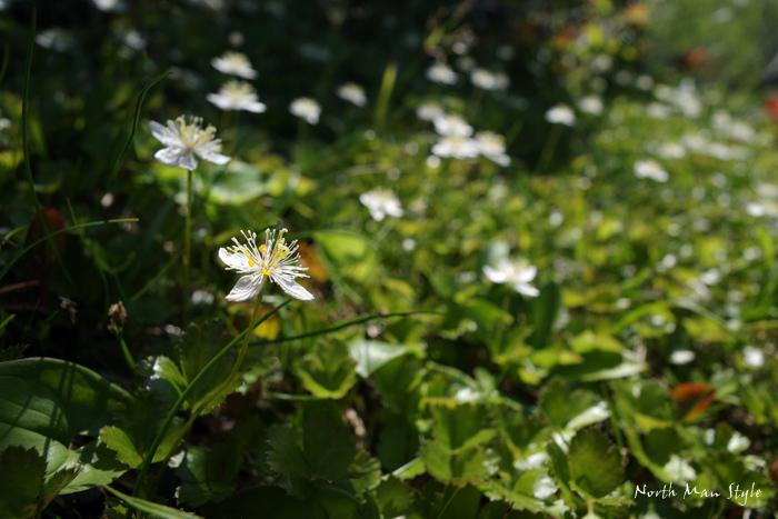 春のオロフレ山_a0114060_13364882.jpg