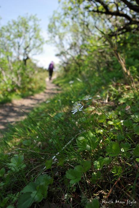 春のオロフレ山_a0114060_13373172.jpg