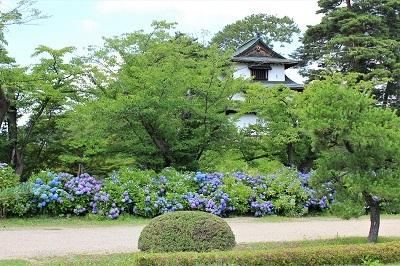 弘前城植物園のあじさい_2021.07.13撮影_d0131668_13201408.jpg