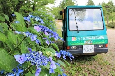弘前城植物園のあじさい_2021.07.13撮影_d0131668_13215212.jpg