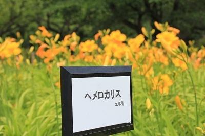 弘前城植物園のあじさい_2021.07.13撮影_d0131668_13434892.jpg