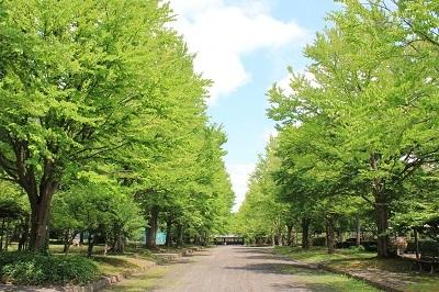 弘前城植物園のあじさい_2021.07.13撮影_d0131668_14033591.jpg